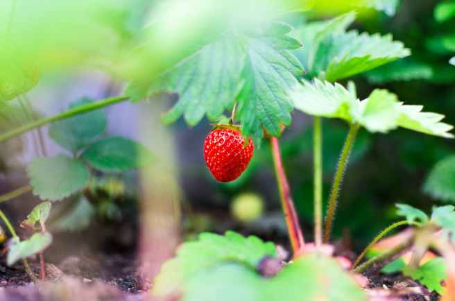agriculture blur color confection